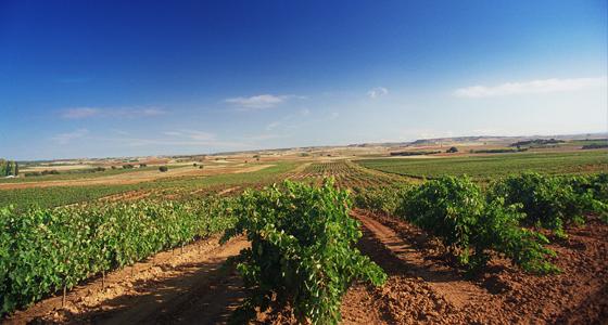 Was Spanischen Wein einzigartig macht