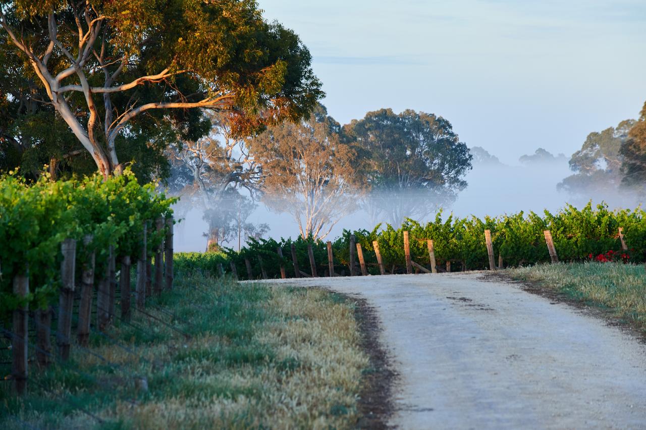 Penfolds Grange - die Weinlegende aus Australien